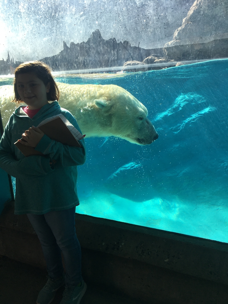 Abigail, 6th grade, and polar bear.