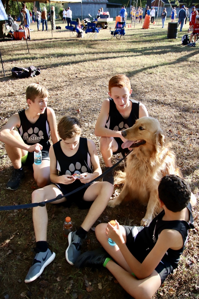 Golden retriever with XC runners after the race