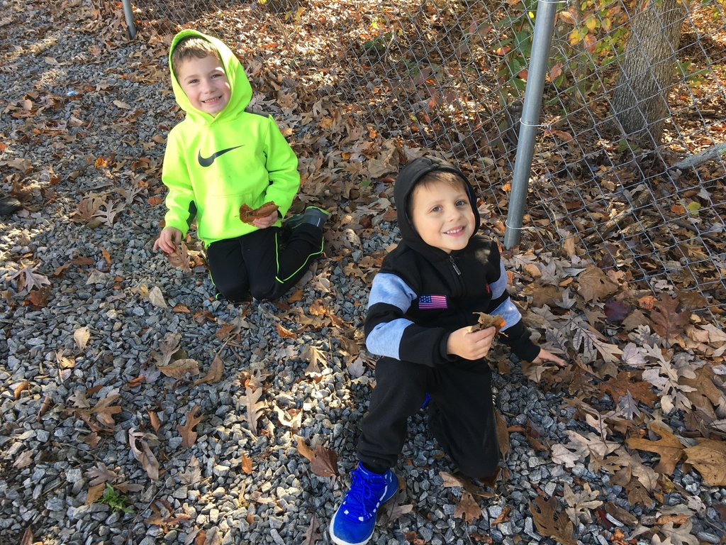 Collecting leaves and acorns!